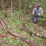 Dr. Alan Nilo da Costa assessing damage by glass-head leaf-cutter ants (Atta laevigata) in Brazil's Cerrado.