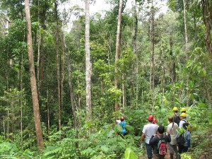 1 year old logging gap in Gabon,