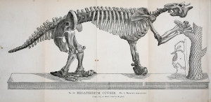 "The Giant Sloth Megatherium cuvieri, one of South America's largest Pleistocene mammals. This image is from the 1866 ""Catalogue of casts of fossils""; Rochester, N. Y.,Benton & Andrews, Printers. (Courtesy of the Biodiversity Heritage Library; CC BY 2.0)."